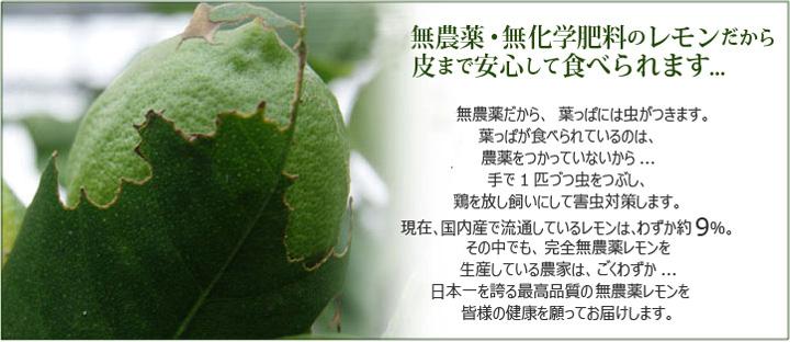 無農薬・無化学肥料のレモンだから皮まで安心して食べられます。